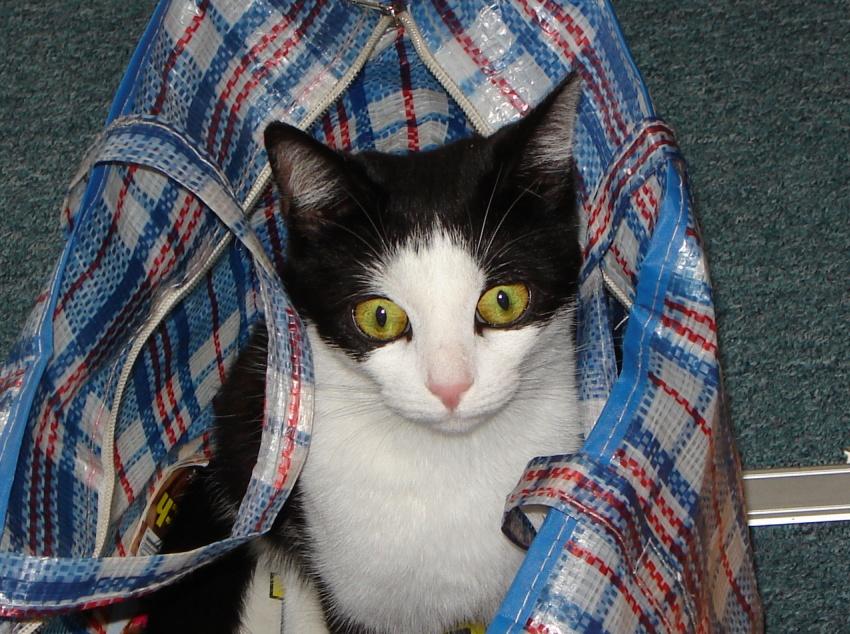 Zaskoczony kot